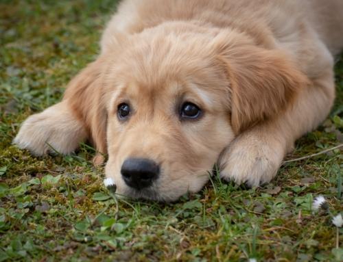 Tag din hund med på rejsen helt uden besvær
